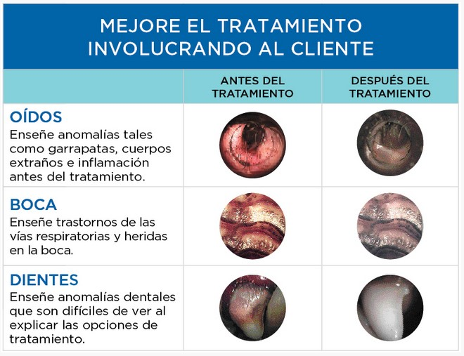 macroview_veterinaria_welch allyn_tratamientos